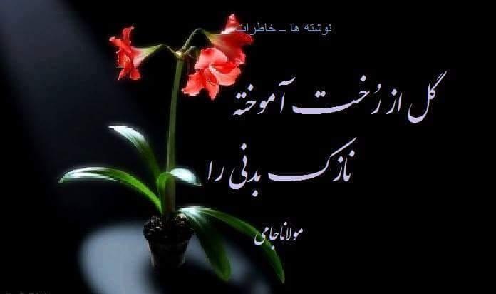 گل از رخت آموخته نازک بدنی را