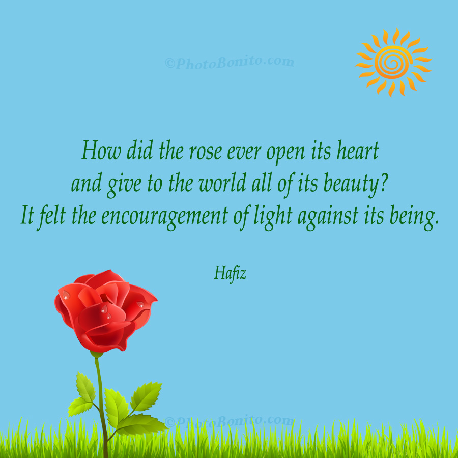 How Did The Rose Ever Open Its Heart By Hafiz