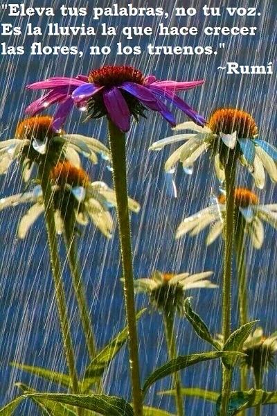 Poesia de Rumi en Español 000171