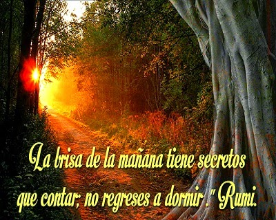Poesia de Rumi en Español 00024