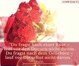 Rumi Zitate 00017