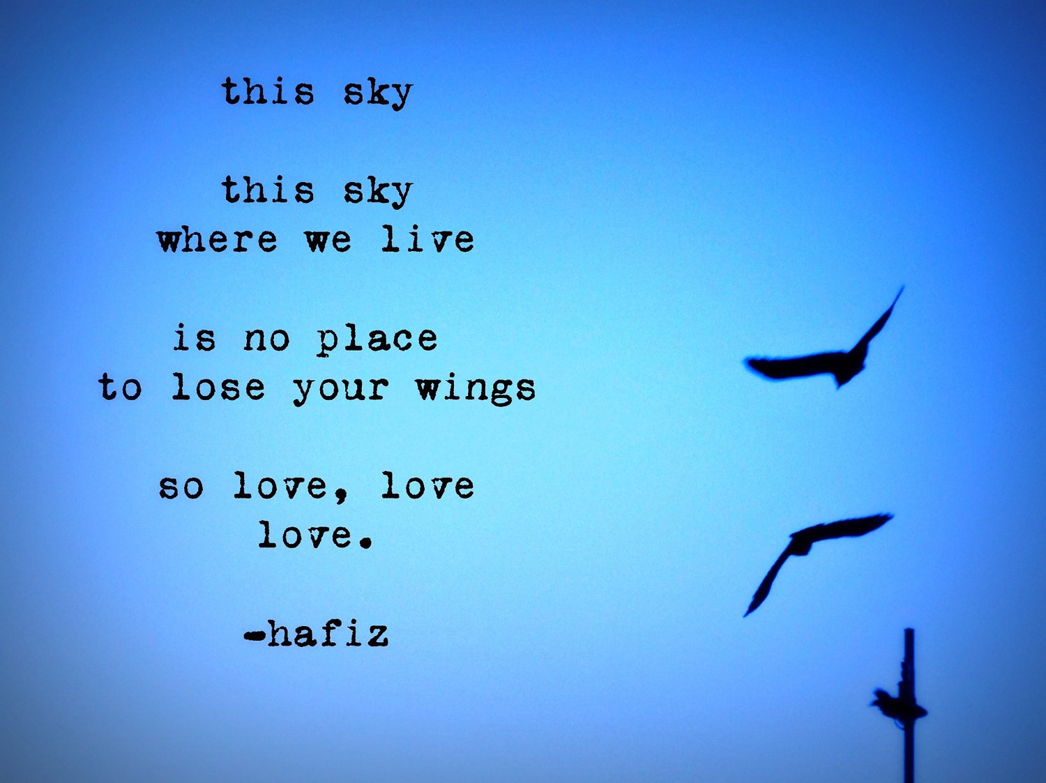 This Sky This Sky Where We Live Is No Place To Lose Your Wings By Hafiz