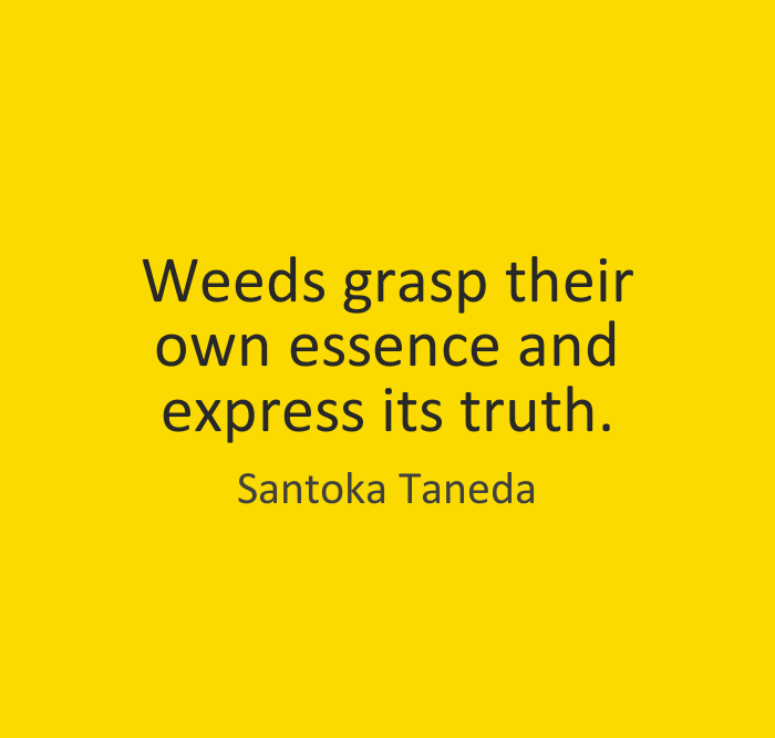 Weeds Grasps Their Own Essence And Express Its Truth By Santoka Taneda